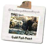 gold_fish_point_shot